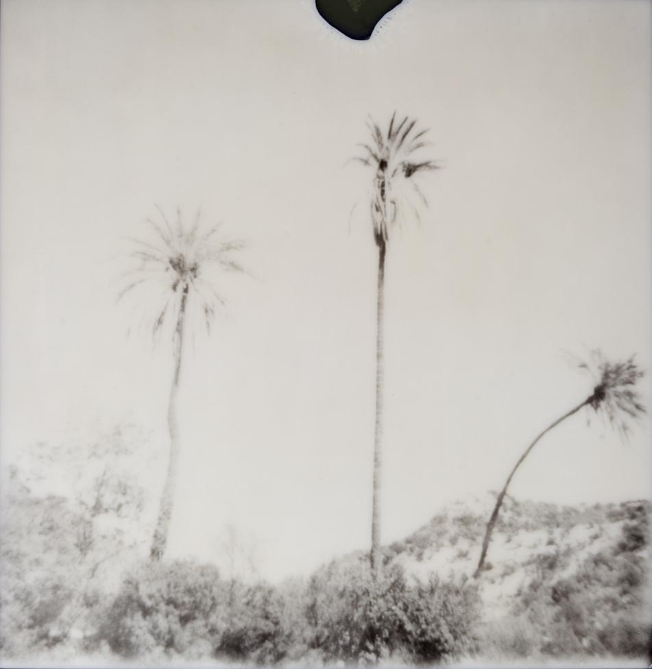 palmschwarz II
